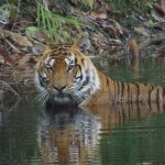 Here's How To Choose The Best Jungle Safari In Madhya Pradesh
