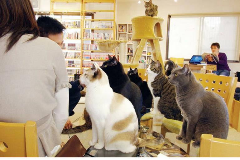 Cat Cafe Nekorobi, Tokyo