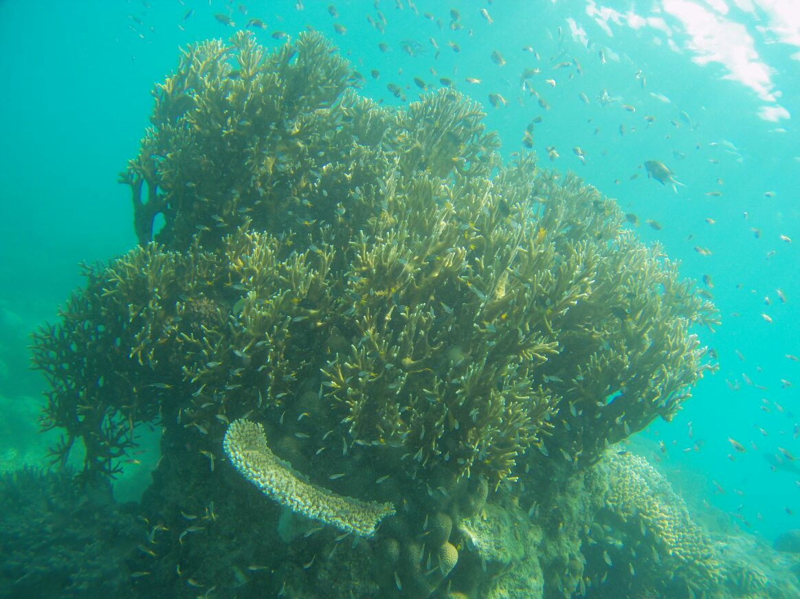 One of the corals in the Outer Reef