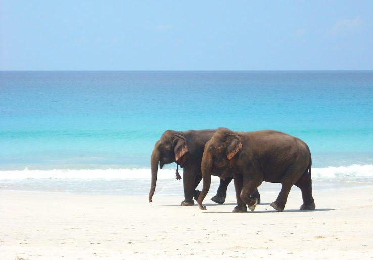 Elephant Beach At Havelock Island