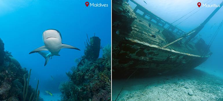 Marine Life: Maldives vs Mauritius
