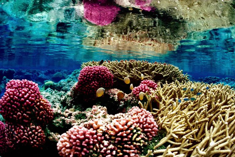 photography exhibition at Mumbai's Underwater Festival