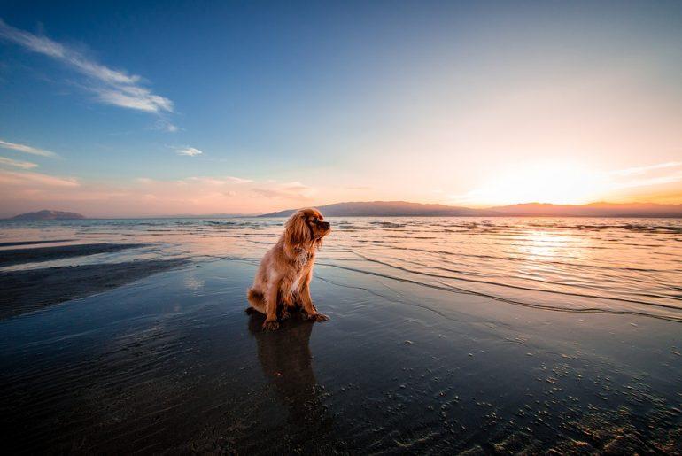 beach-pooch