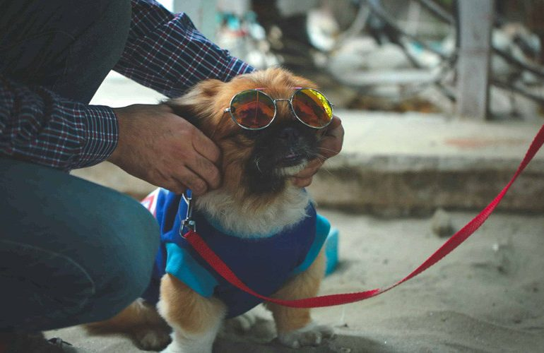 Dog-Friendly Cafés in Delhi NCR