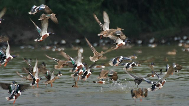Sultanpur Lake