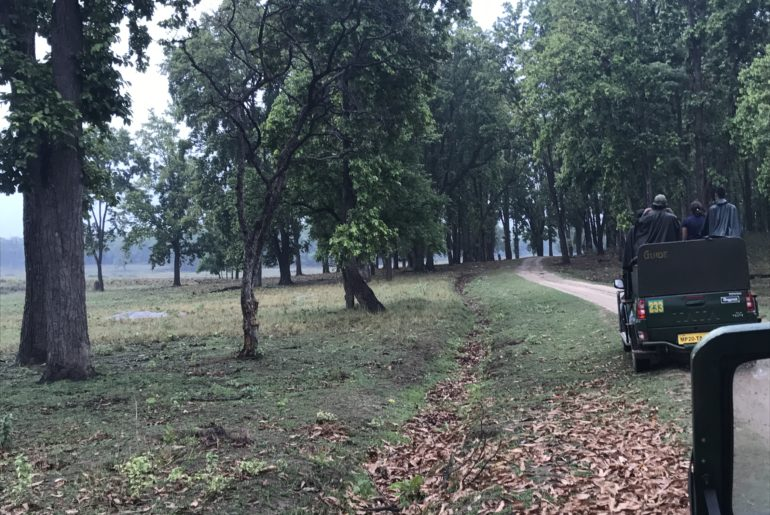 the_view_kanha_jungle