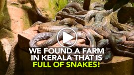 The snake farm Kerala Curly Tales
