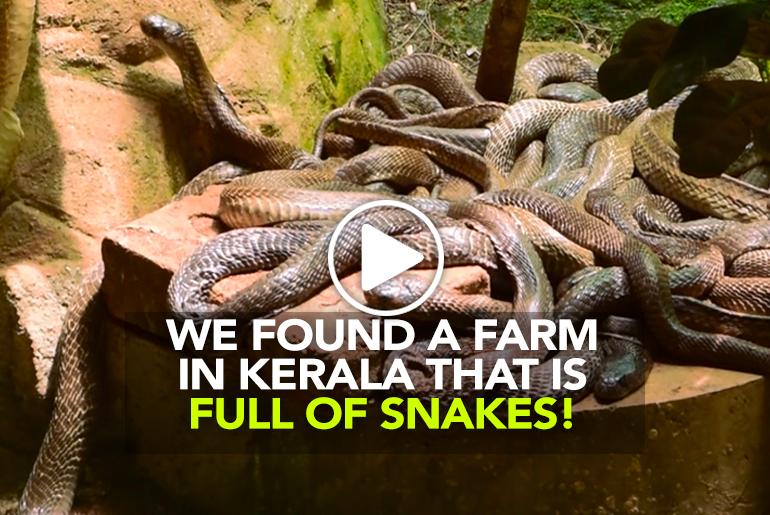 The snake farm Kerala Curly Tales