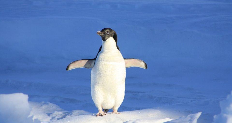 penguin-Antarctica