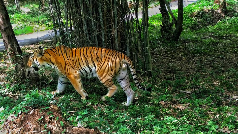 Curly_Tales_Bannerghatta_National_Park