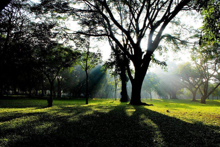 Cubbon_Park,_Bangalore