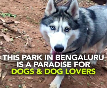 This Sunday Take Your Doggos Out For Some Fun At Cubbon Park