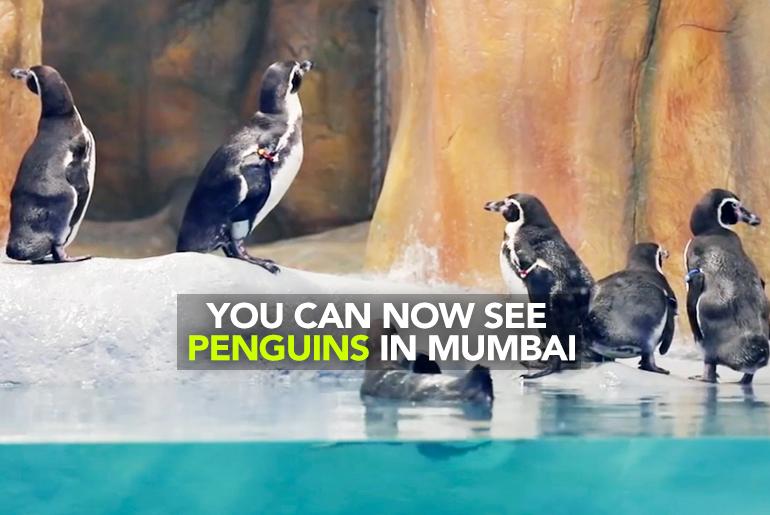 Penguin Feature imagel