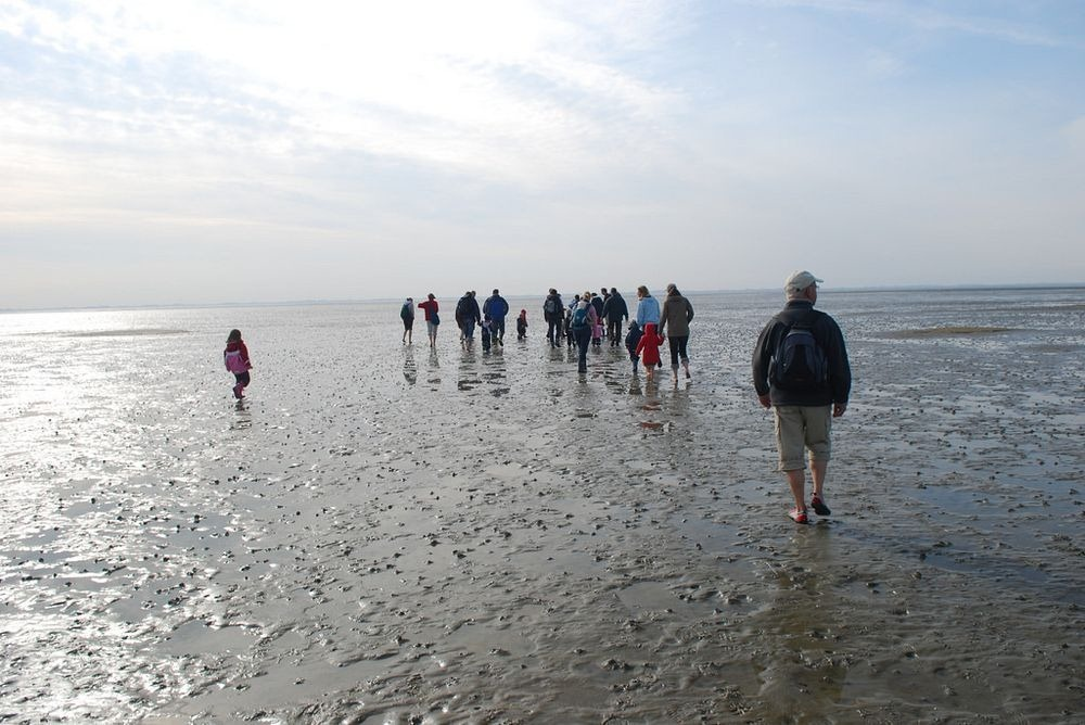 Wadden Sea Hiking - Curly Tales