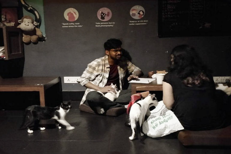 Get 'Purr-y' With Mumbai's First Cat Cafe In Versova