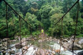 Meghalaya - Curly Tales