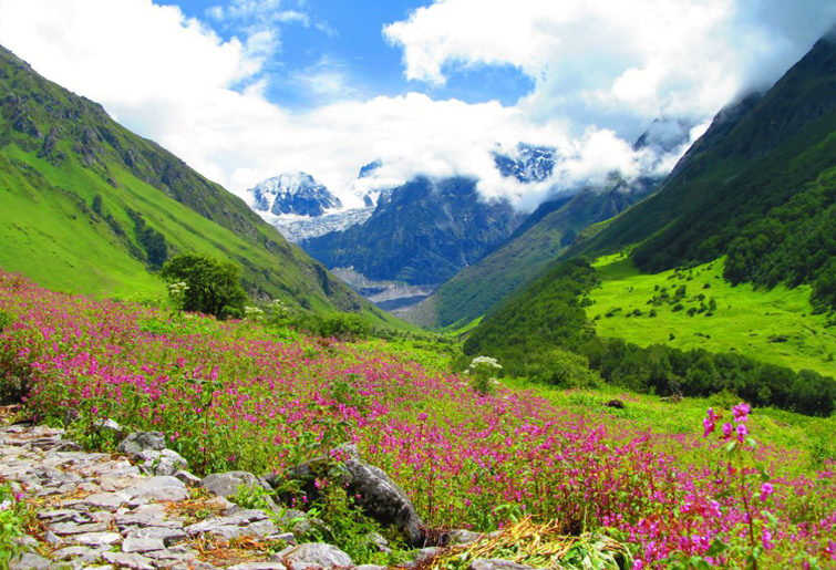 valley-of-flowers-national-park-tour-my india