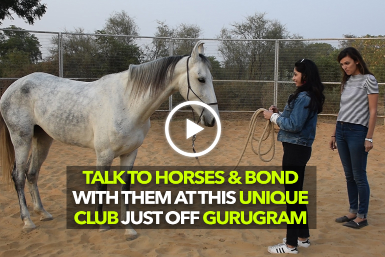 Talk To Horses & Bond With Them At Gurgaon Polo & Equestrian Club