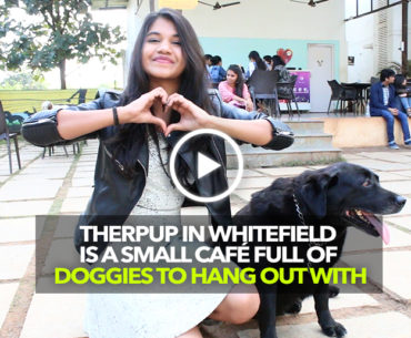 Therpup In Bengaluru Is A Café Full Of Doggies To Hang Out With