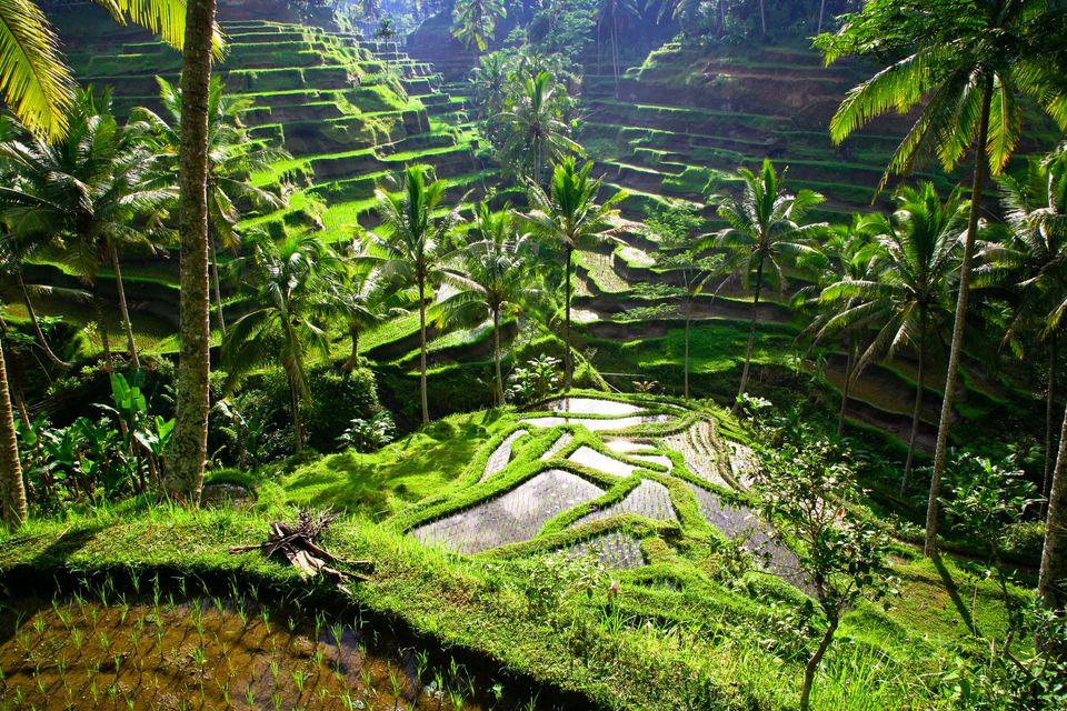 4 Desa Wisata Unik di Bali Yang Perlu Kamu Tahu 3