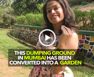 The Maharashtra Nature Park Near Sion Is A Mini-Forest Made On A Dumping Ground