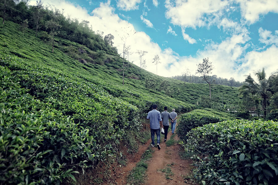Walk to the tea plantation