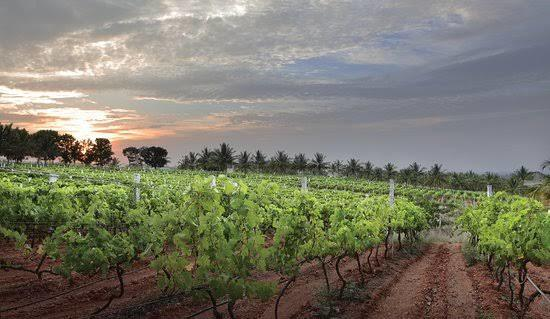 romantic new year's getaways from bangalore, grover vineyards