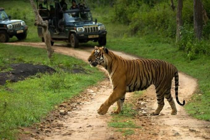 Budget New Year's Getaways From Bangalore, bandipur national park