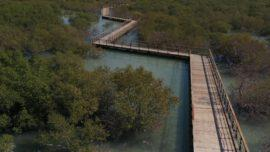Mangrove boardwalk abu dhabi