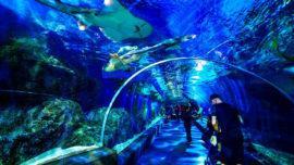 Mumbai aquarium