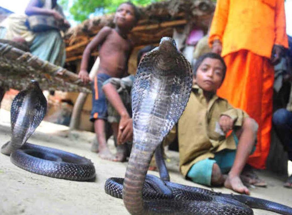 most unique places in india, snake village