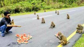 monkeys social distancing Arunachal Pradesh