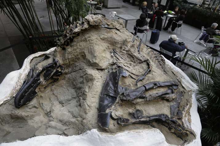 Rare Toothless Dinosaur Discovered In Australia