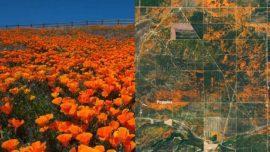 California's Orange Poppy Bloom seen from space NASA