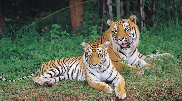 Adopt animals at Bangalore's Bannerghatta Biological Park