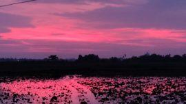 Sky Is pink In Bhubaneshwar Post Cyclone Amphan