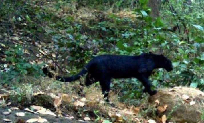 black panther goa sanctuary