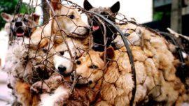 china dog meat fair