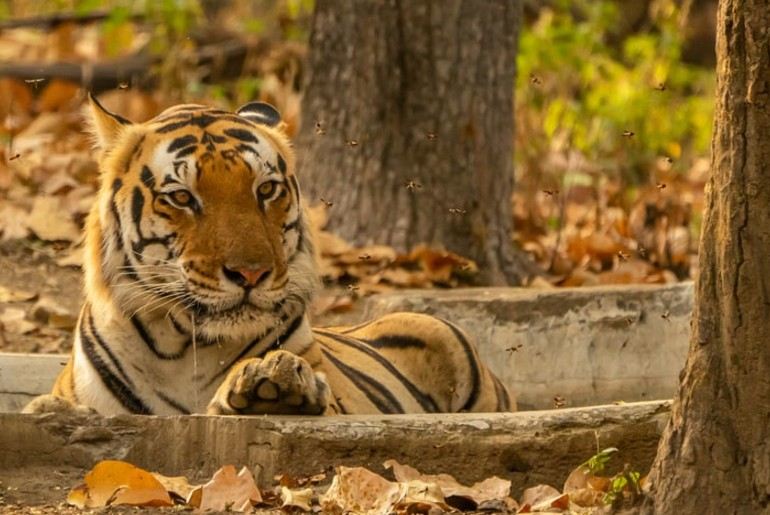 Madhya Pradesh National Parks reopen