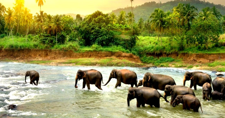 elephants kanha forest