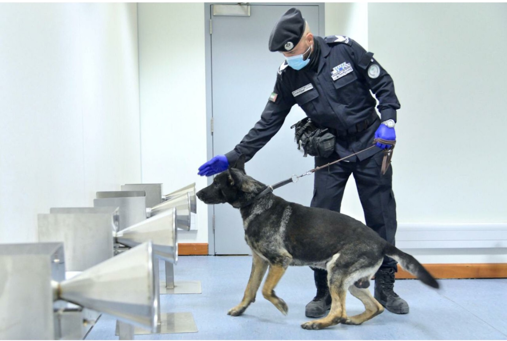 sniffing dogs in action at Dubai airport