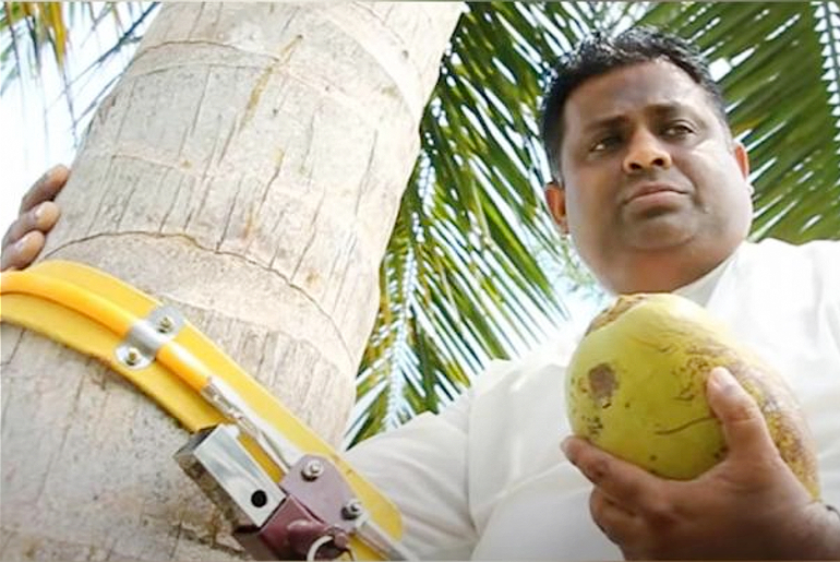 Sri Lanka Minister Climbs Tree