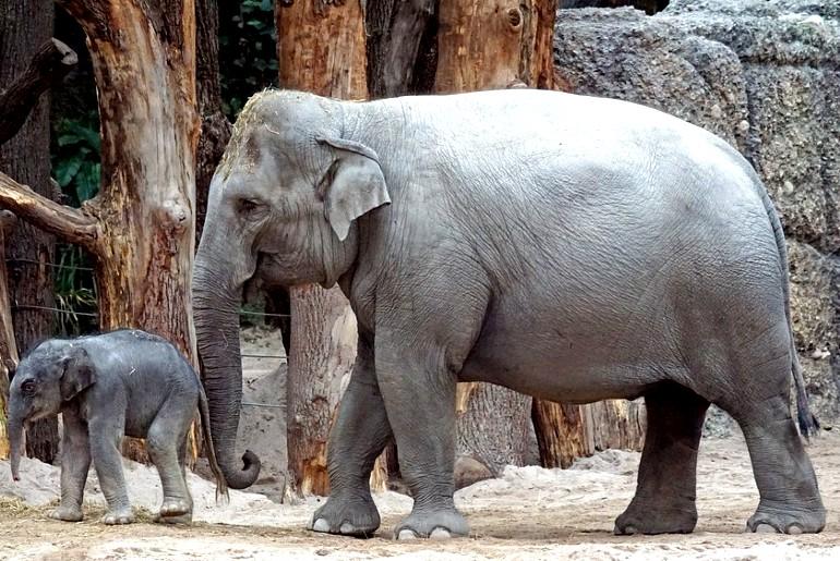 aadhar cards for elephants