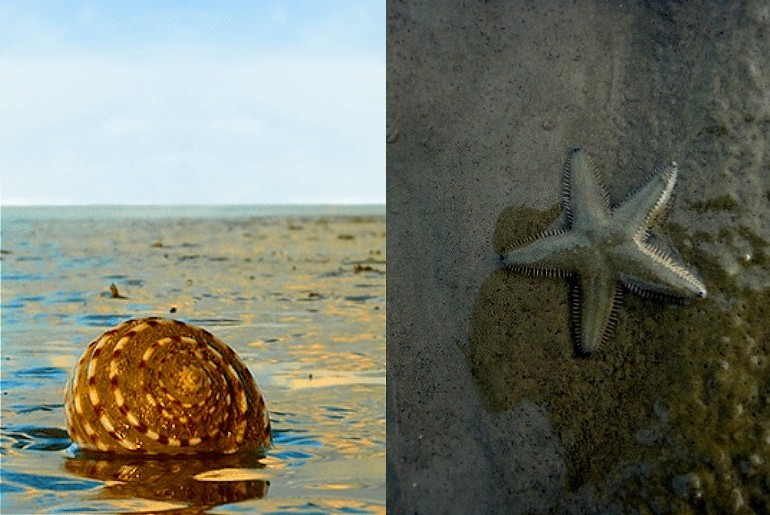 Hide And Seek Beach Odisha