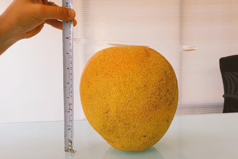 India's Largest Orange Nagpur