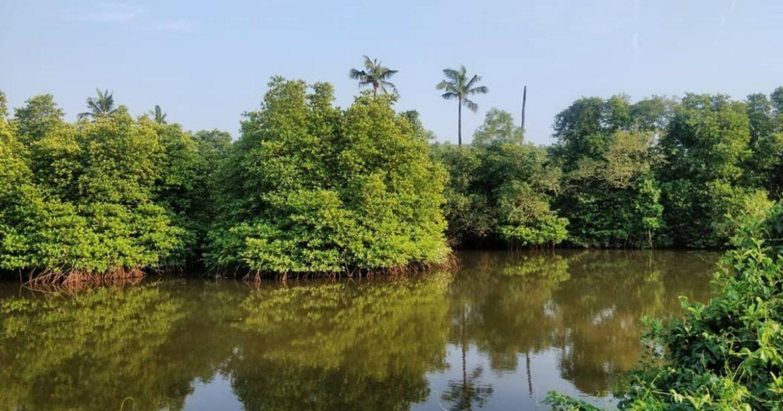 mangrove safaris maharashtra