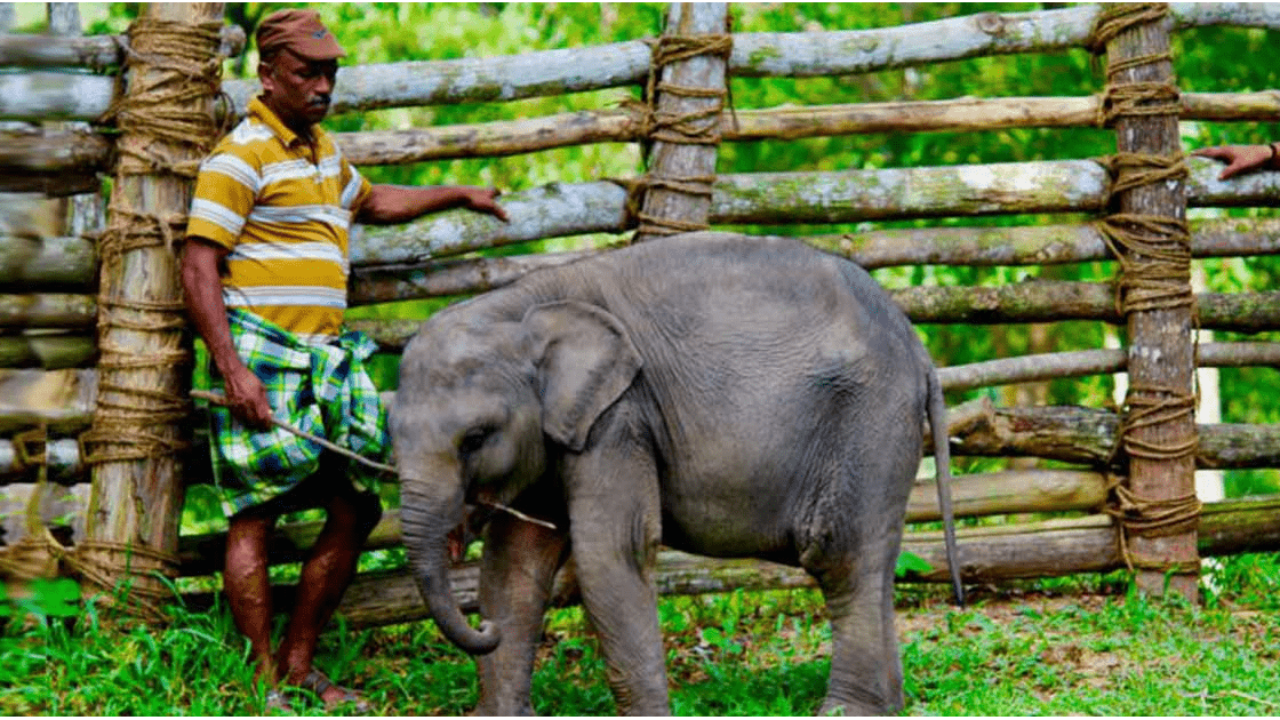 Kerala To Get World S Largest Elephant Care Cure Facility With Elephant Museum Cafe Curly Tales Kerala temple festivals are elaborate and exotic. largest elephant care cure facility