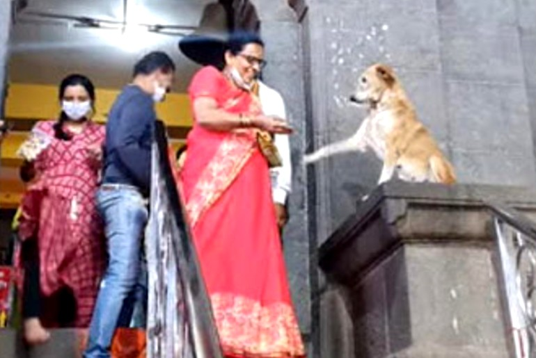 dog in temple
