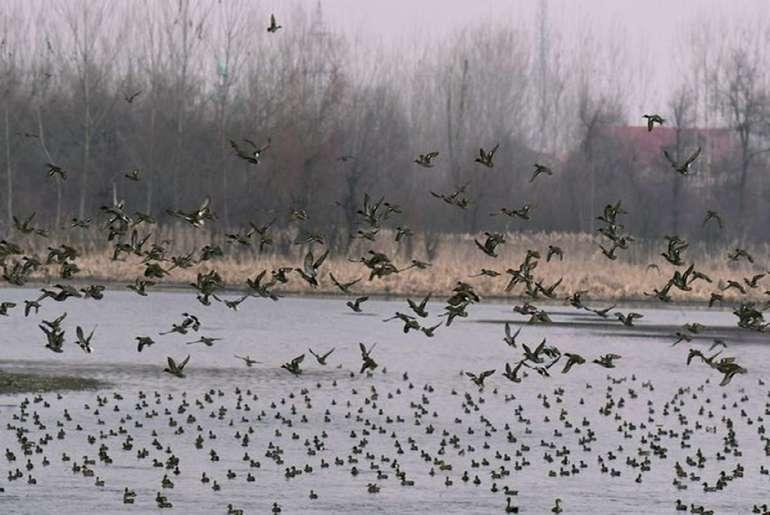 Avian flu in delhi