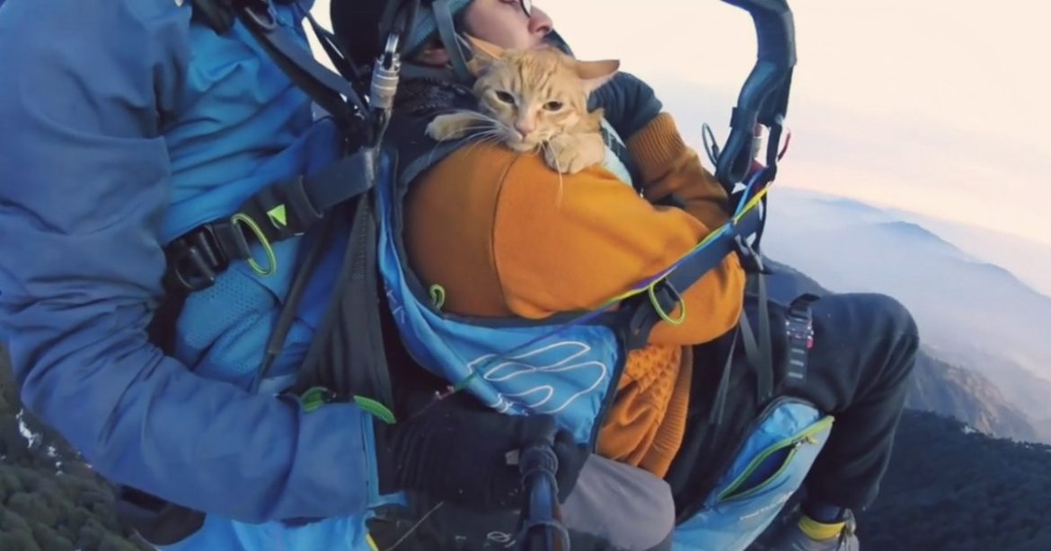 Paragliding Experience With Kitten